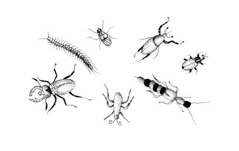 Picture of a collection of bugs